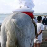 9月17日、吾妻神社祭礼が行われます(写真募集!)