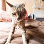 里山の子、さっちゃん/全身マヒの猫「サチ」と仲間たち