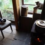 ワンコニャンコの楽園・癒しの古民家カフェ「カフェ&ギャラリー ダム」